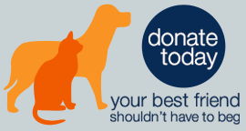 Donate Today: Your best friend shouldn't have to beg.